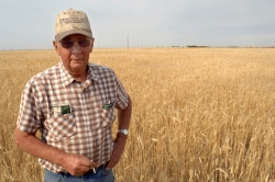Wheat farmer, Lyle Sherrow. Goodwater, SK