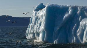 Icebergs-GSL_4844.jpg