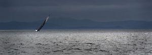 Sailing-20120818_7343.jpg