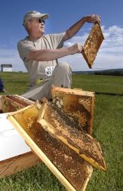 Bee farmers